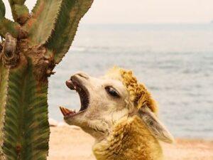 Animales del desierto de Atacama