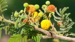Plantas ornamentales de Perú